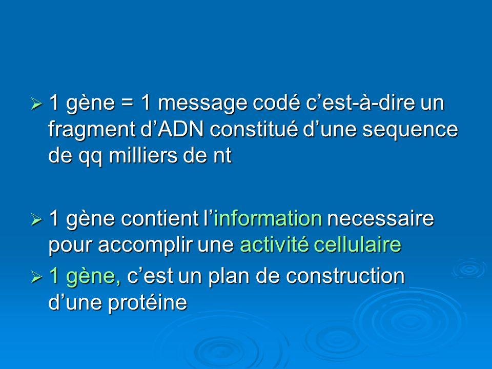 1 gène = 1 message codé c'est-à-dire un fragment d'ADN constitué d'une sequence de qq milliers de nt