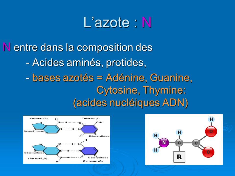 L'azote : N N entre dans la composition des - Acides aminés, protides,