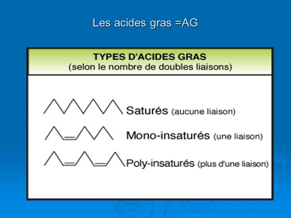 Les acides gras =AG