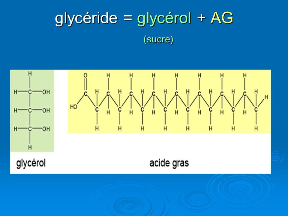 glycéride = glycérol + AG (sucre)