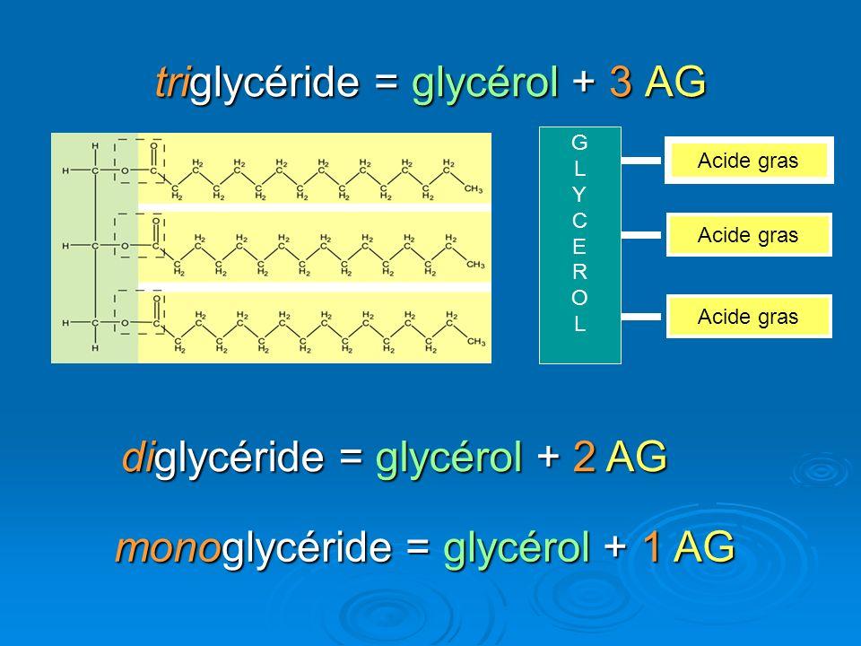 triglycéride = glycérol + 3 AG