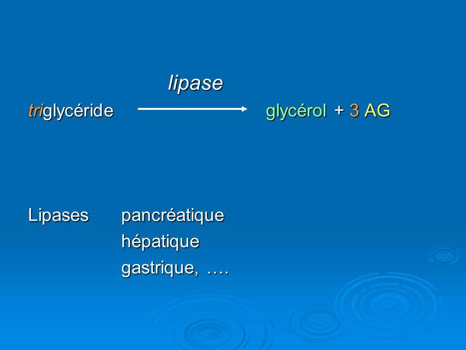 lipase triglycéride glycérol + 3 AG Lipases pancréatique hépatique gastrique, ….