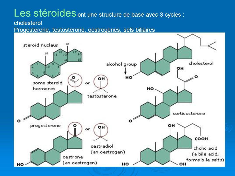 Les stéroides ont une structure de base avec 3 cycles : cholesterol