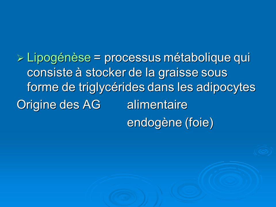 Lipogénèse = processus métabolique qui consiste à stocker de la graisse sous forme de triglycérides dans les adipocytes