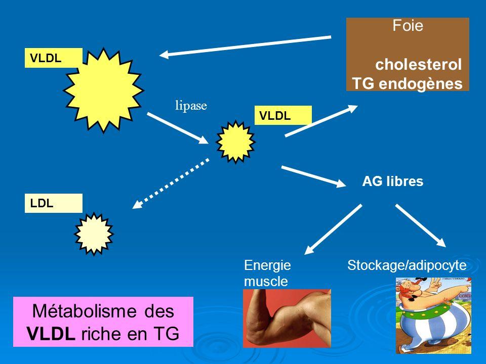 Métabolisme des VLDL riche en TG