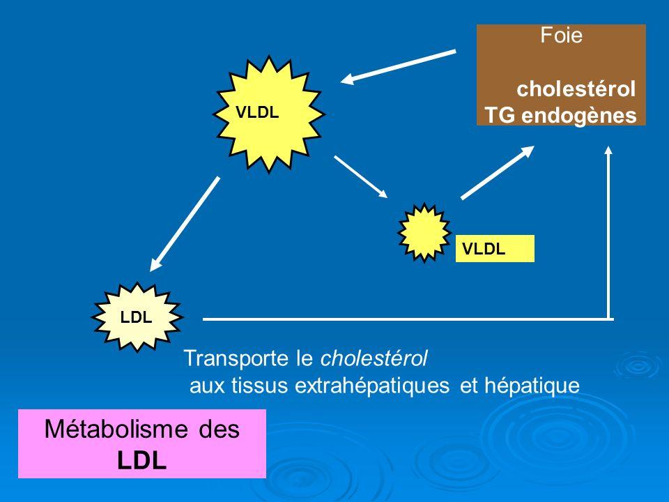 Métabolisme des LDL Foie cholestérol TG endogènes