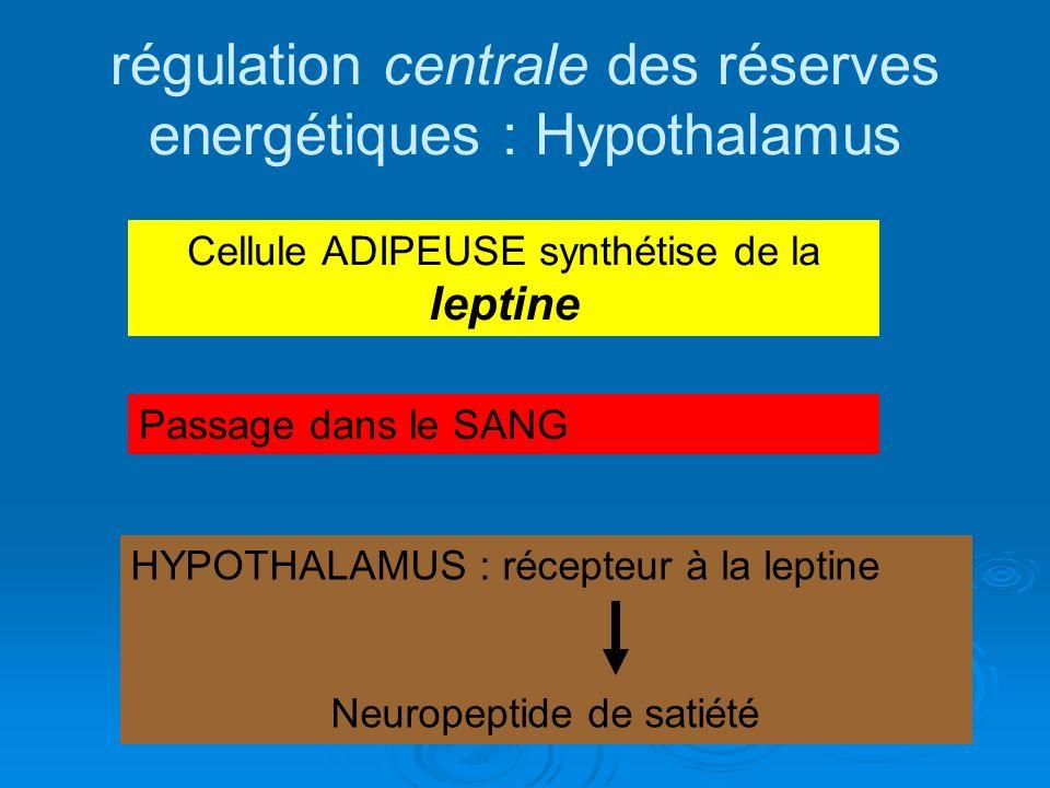 régulation centrale des réserves energétiques : Hypothalamus