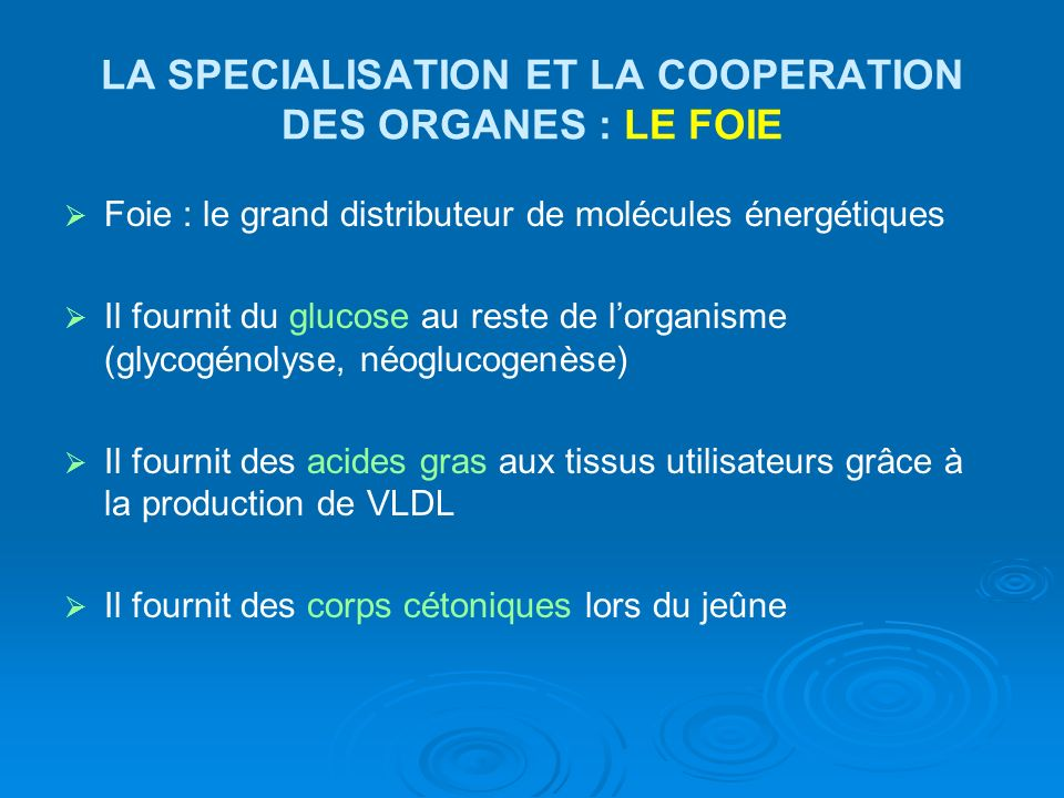 LA SPECIALISATION ET LA COOPERATION DES ORGANES : LE FOIE