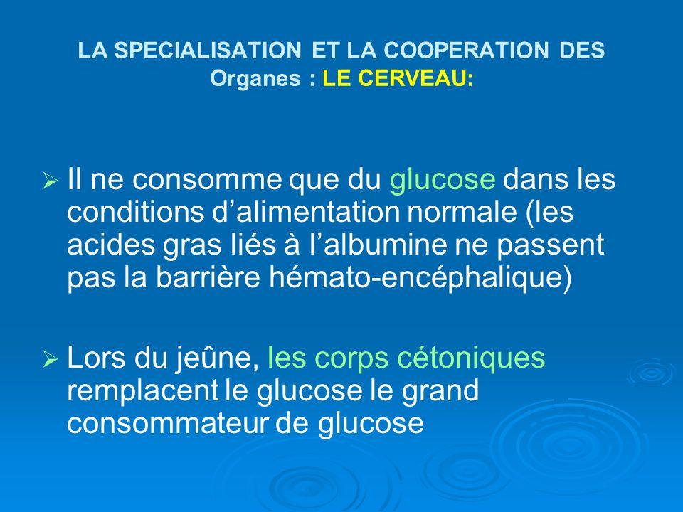 LA SPECIALISATION ET LA COOPERATION DES Organes : LE CERVEAU: