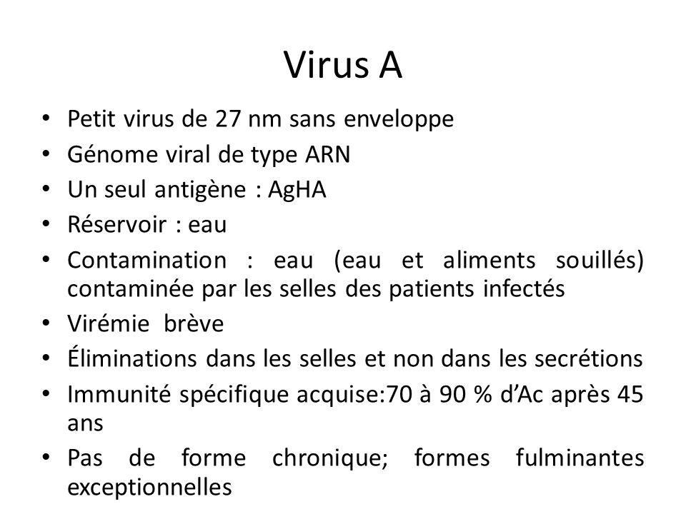 Virus A Petit virus de 27 nm sans enveloppe Génome viral de type ARN