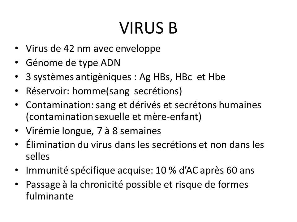 VIRUS B Virus de 42 nm avec enveloppe Génome de type ADN