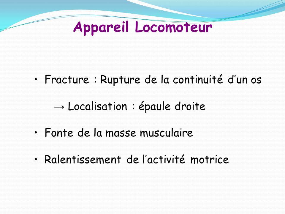 Appareil Locomoteur Fracture : Rupture de la continuité d'un os