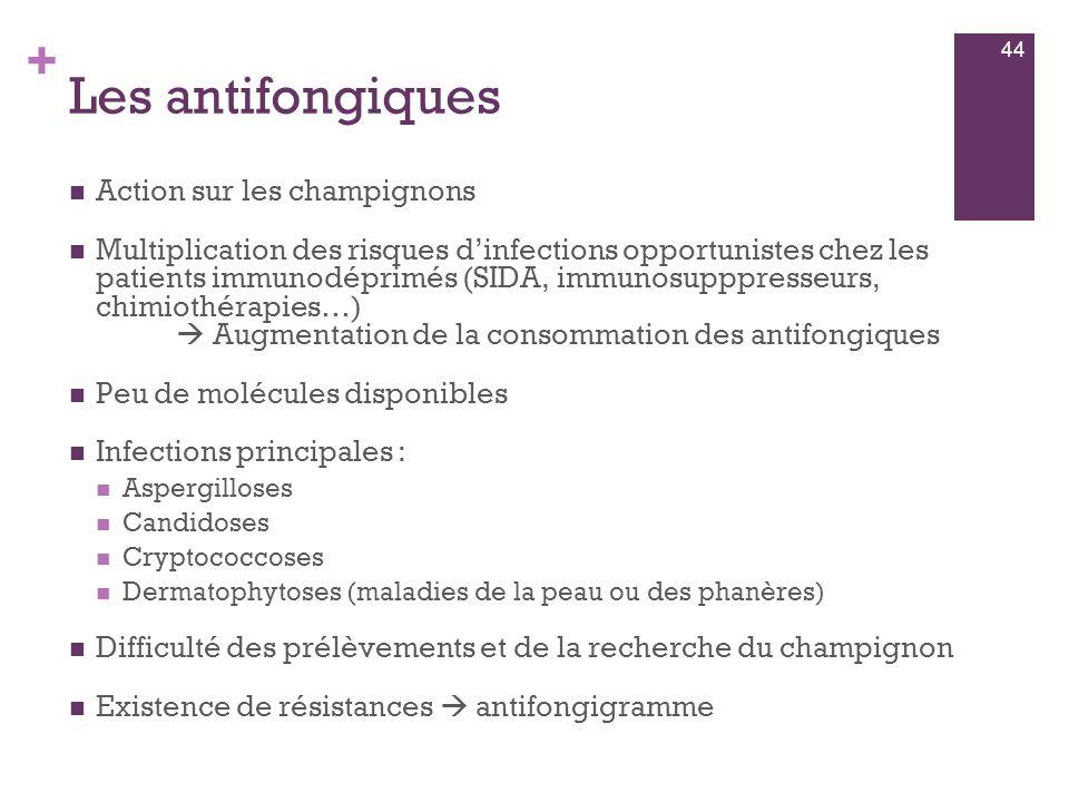 Les antifongiques Action sur les champignons