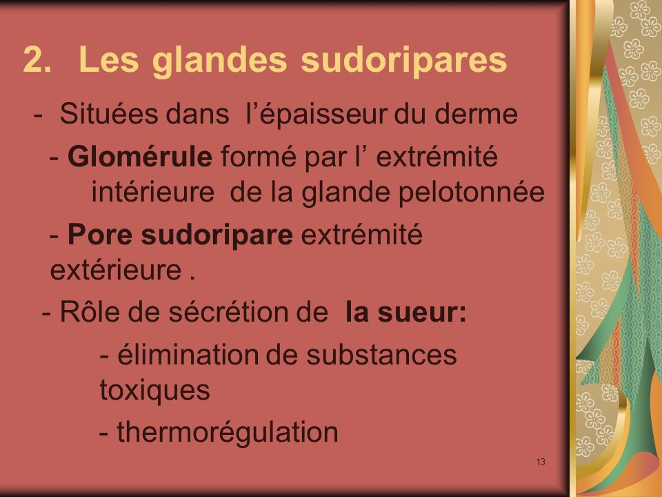 Les glandes sudoripares