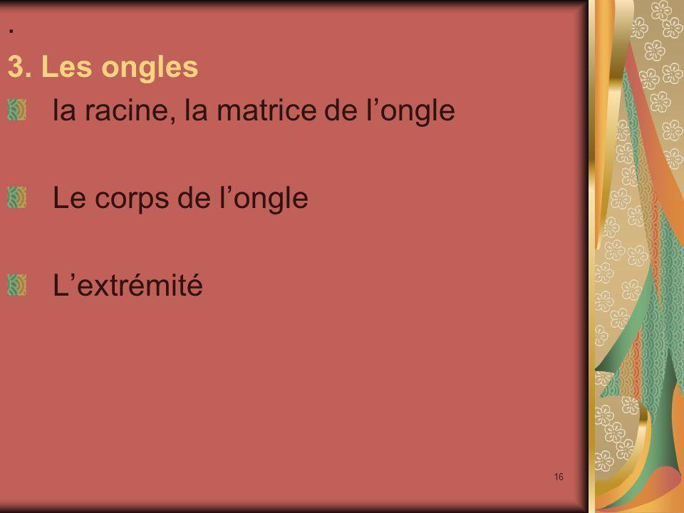 . 3. Les ongles la racine, la matrice de l'ongle Le corps de l'ongle L'extrémité