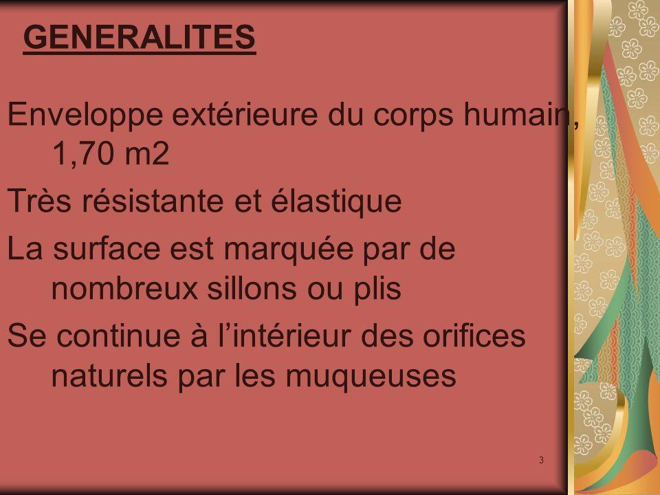 GENERALITES Enveloppe extérieure du corps humain, 1,70 m2. Très résistante et élastique. La surface est marquée par de nombreux sillons ou plis.