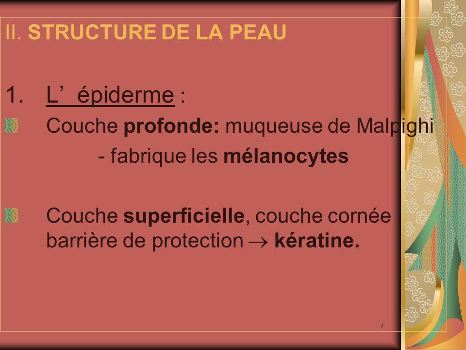 L' épiderme : II. STRUCTURE DE LA PEAU