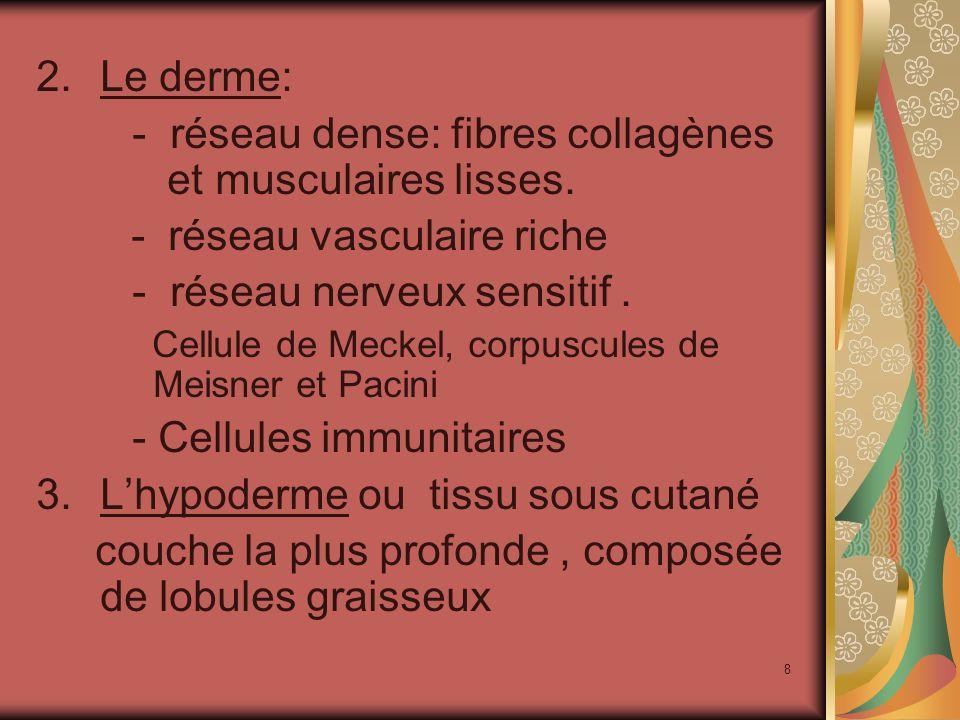 - réseau dense: fibres collagènes et musculaires lisses.