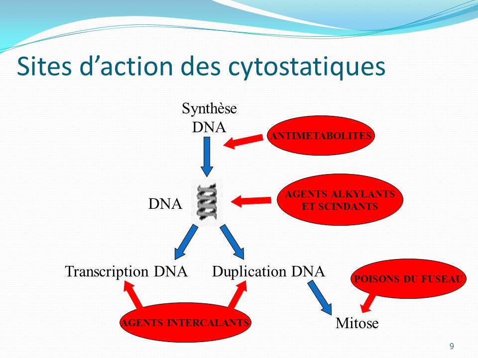 Sites d'action des cytostatiques