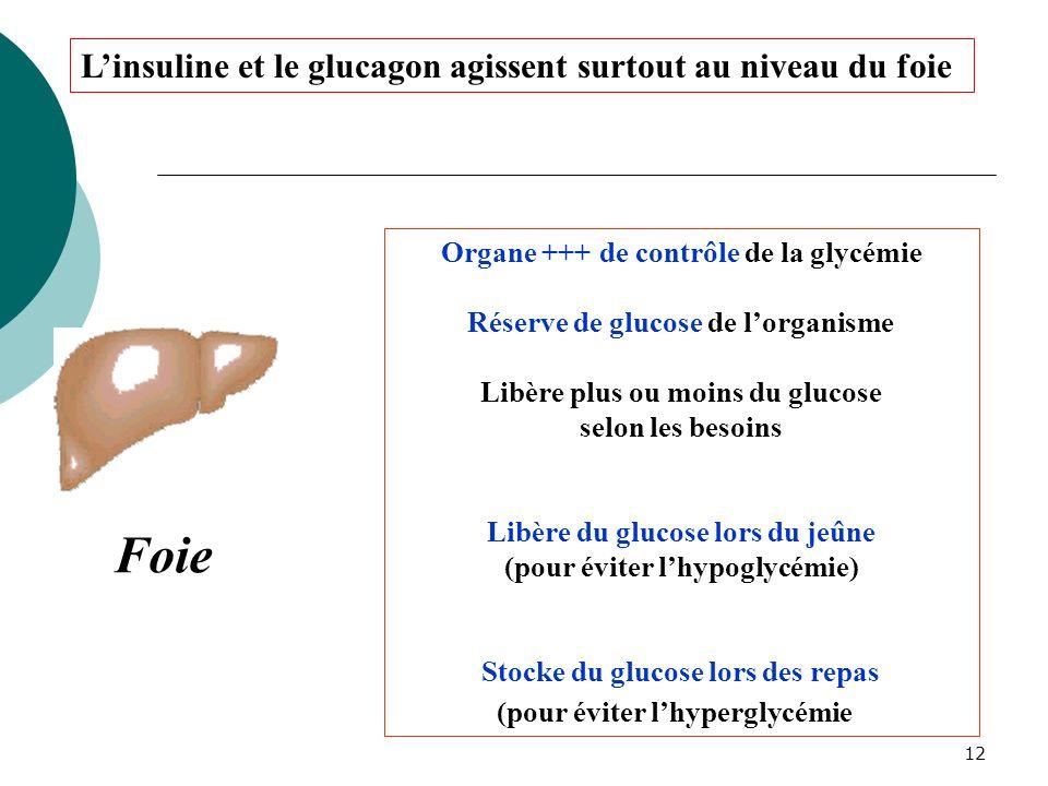 Foie L'insuline et le glucagon agissent surtout au niveau du foie