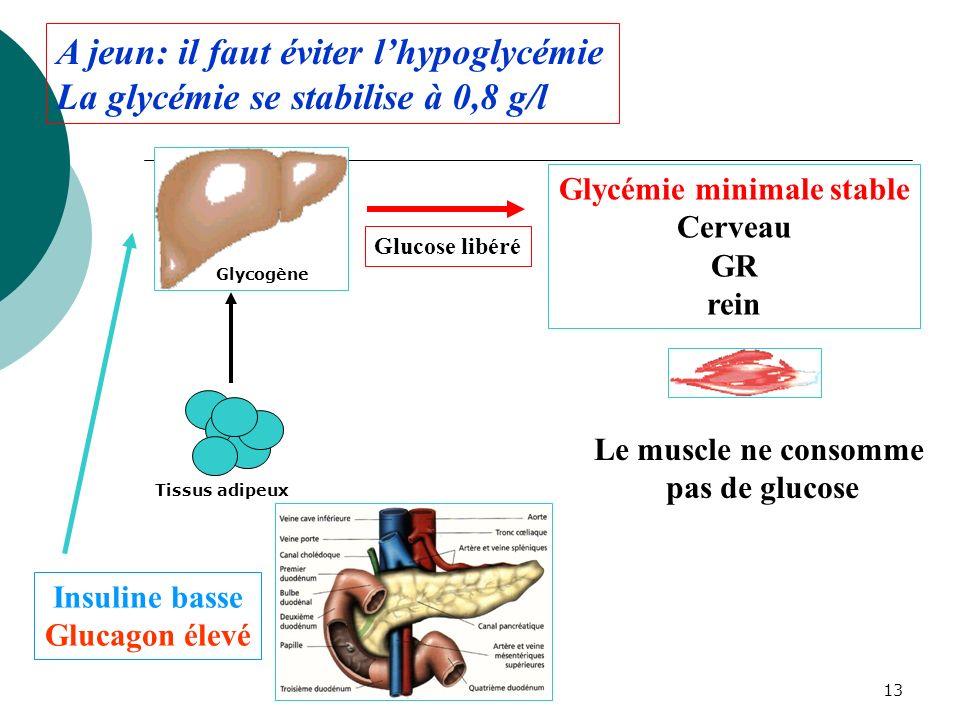Glycémie minimale stable