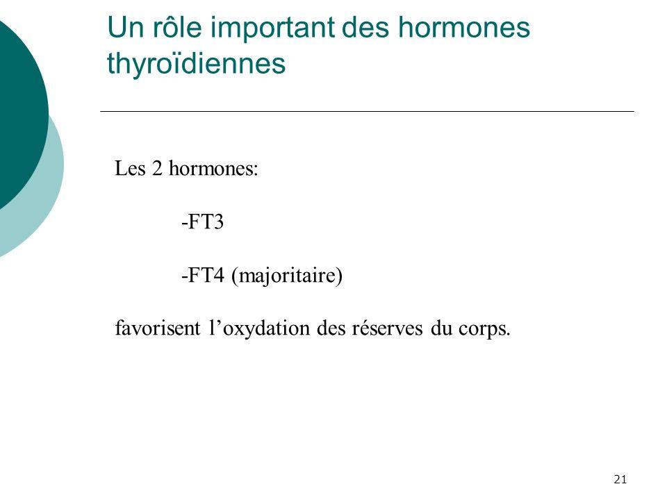 Un rôle important des hormones thyroïdiennes