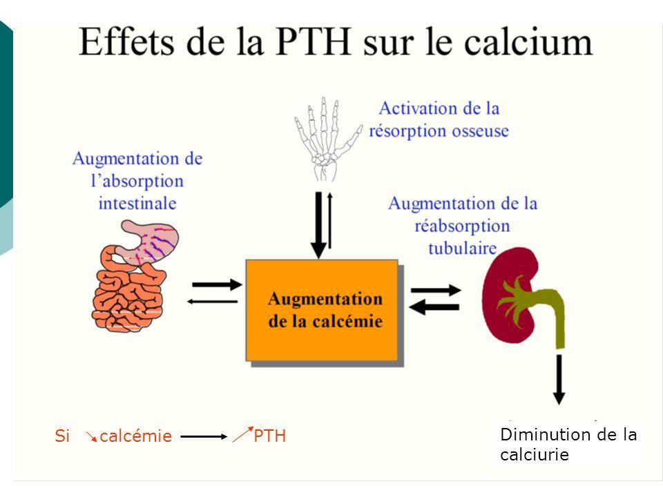 Si calcémie PTH Diminution de la calciurie