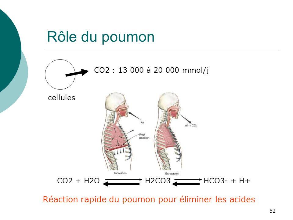 Rôle du poumon Réaction rapide du poumon pour éliminer les acides