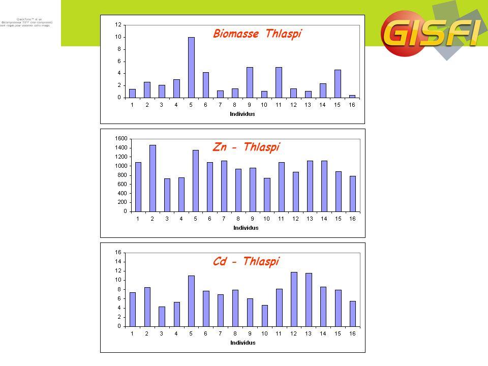Biomasse Thlaspi Zn - Thlaspi Cd - Thlaspi