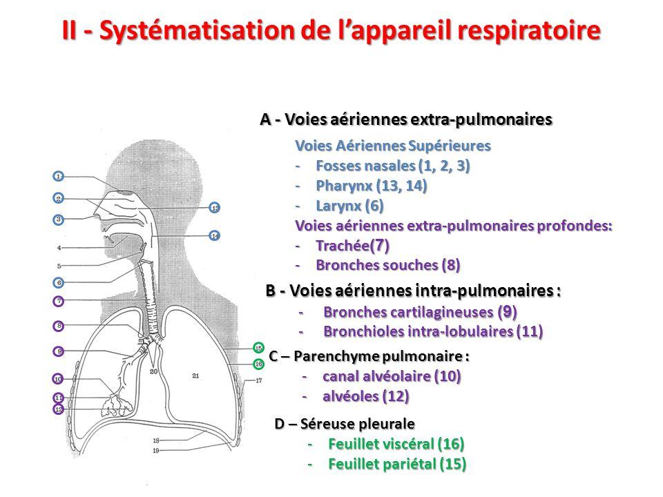 II - Systématisation de l'appareil respiratoire