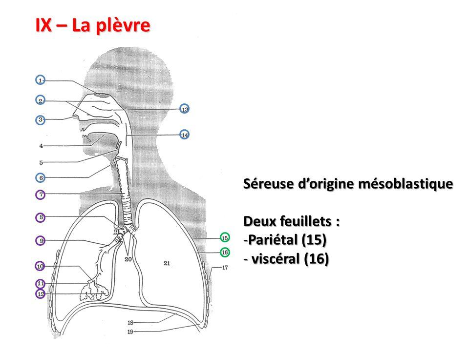 IX – La plèvre Séreuse d'origine mésoblastique Deux feuillets :