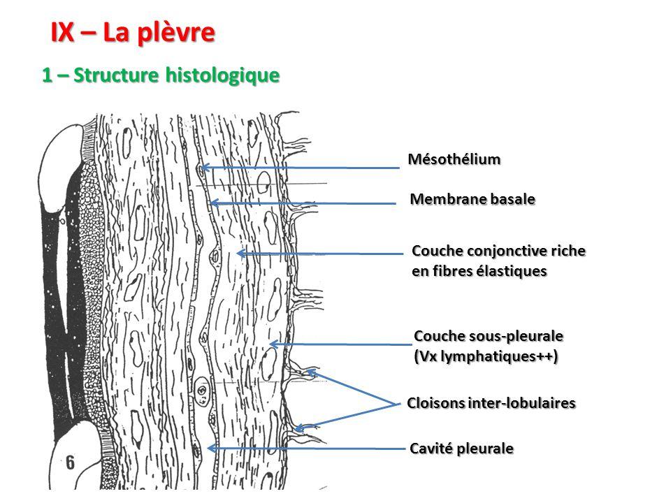 IX – La plèvre 1 – Structure histologique Mésothélium Membrane basale