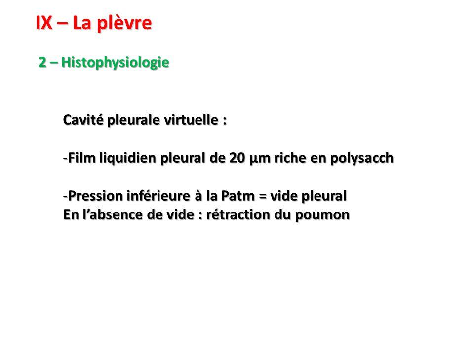 IX – La plèvre 2 – Histophysiologie Cavité pleurale virtuelle :