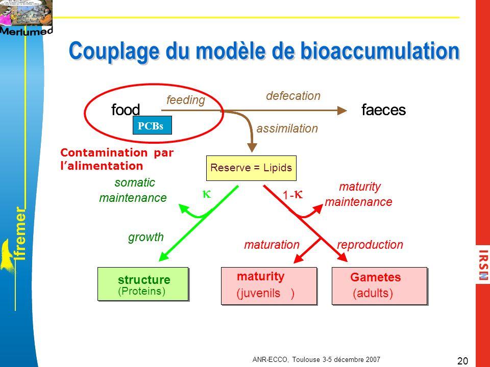 Couplage du modèle de bioaccumulation