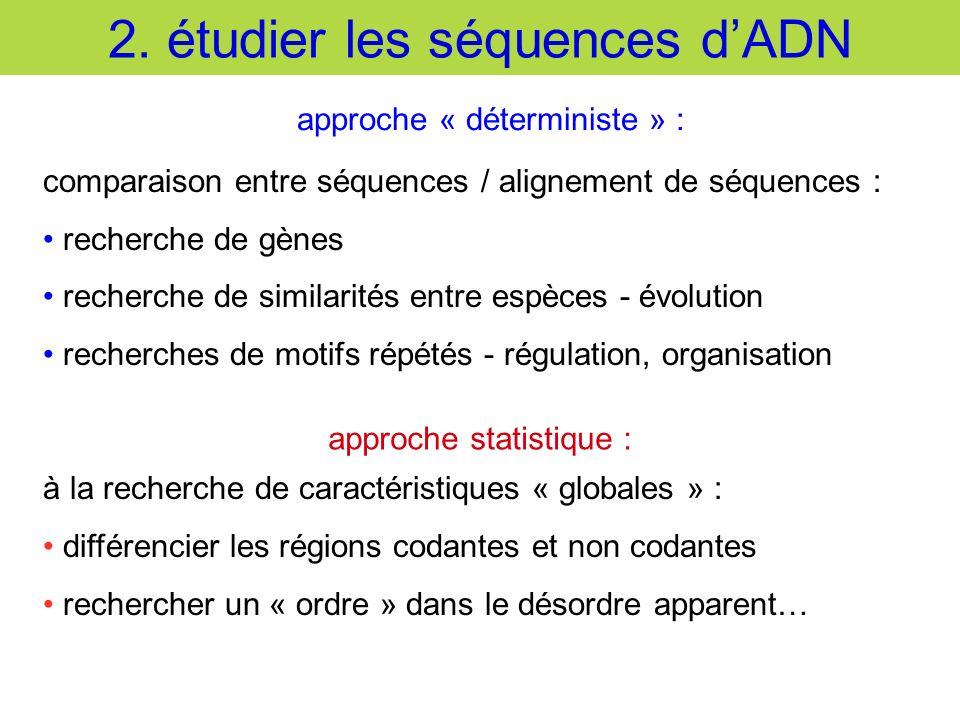 2. étudier les séquences d'ADN