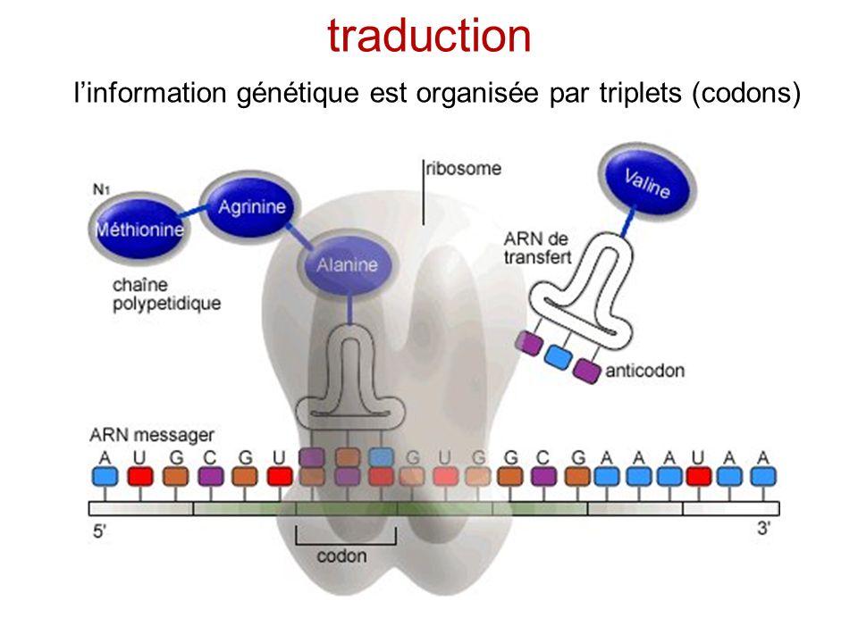 traduction l'information génétique est organisée par triplets (codons)