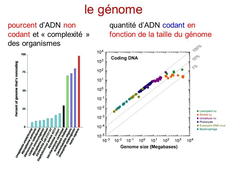 le génome pourcent d'ADN non codant et « complexité » des organismes