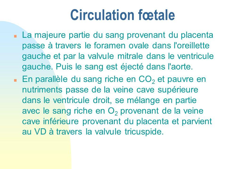 Circulation fœtale