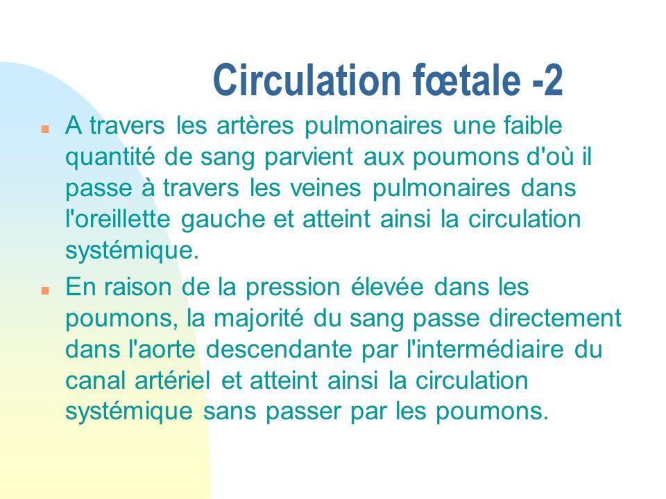 Circulation fœtale -2