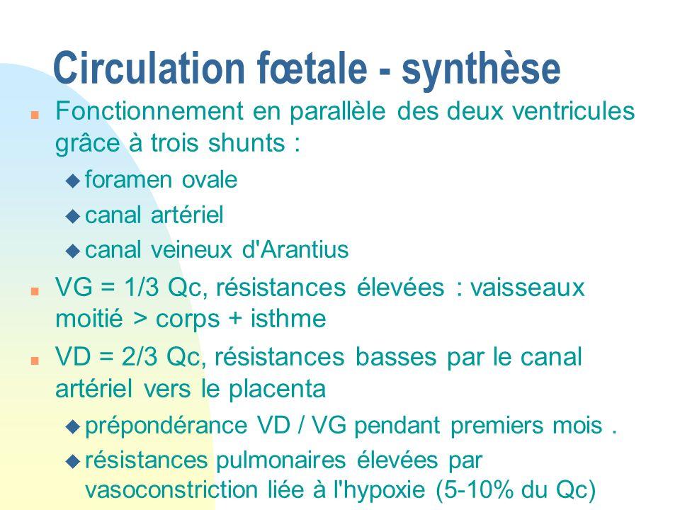 Circulation fœtale - synthèse