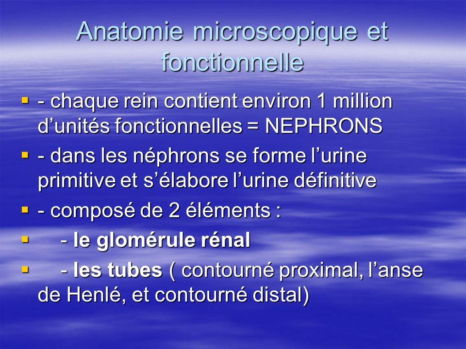 Anatomie microscopique et fonctionnelle