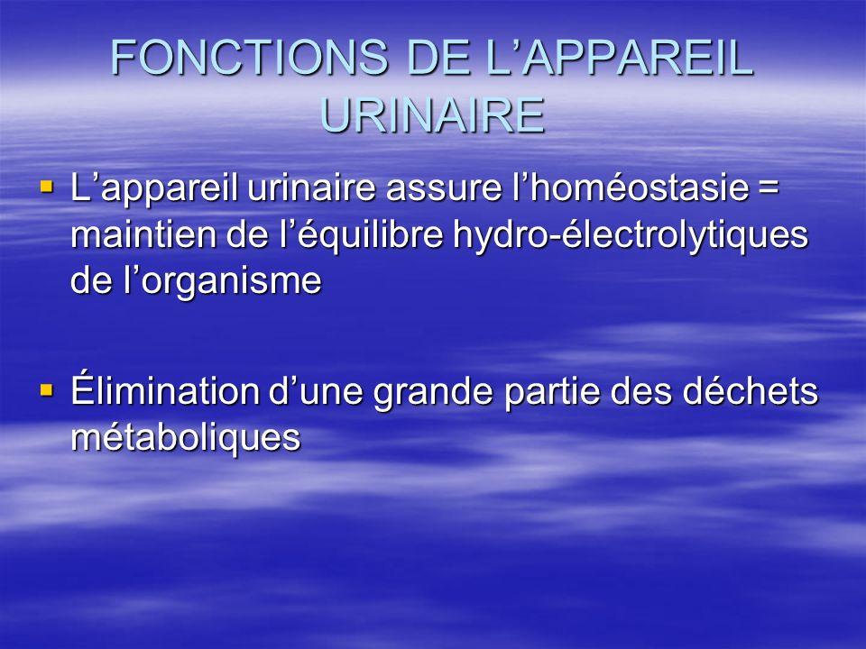 FONCTIONS DE L'APPAREIL URINAIRE