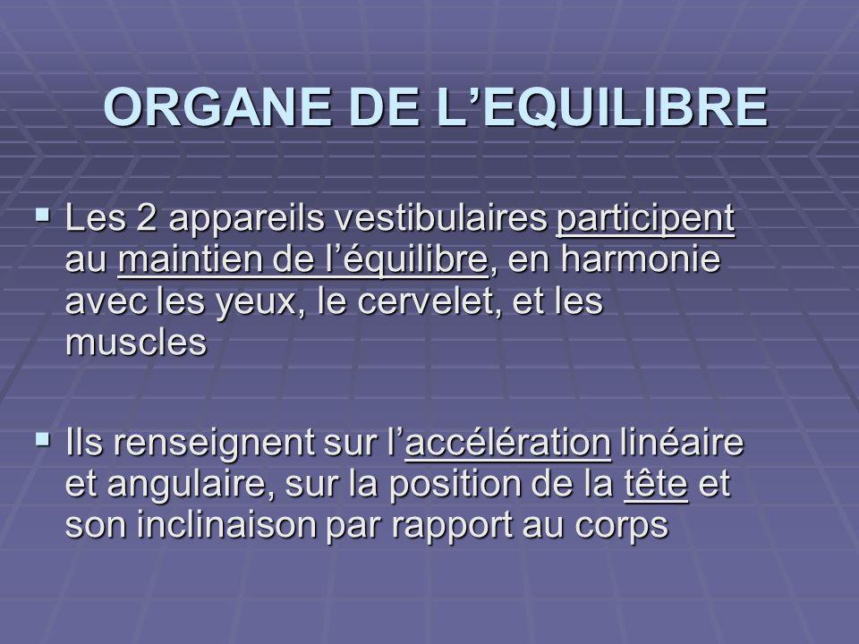 ORGANE DE L'EQUILIBRE Les 2 appareils vestibulaires participent au maintien de l'équilibre, en harmonie avec les yeux, le cervelet, et les muscles.