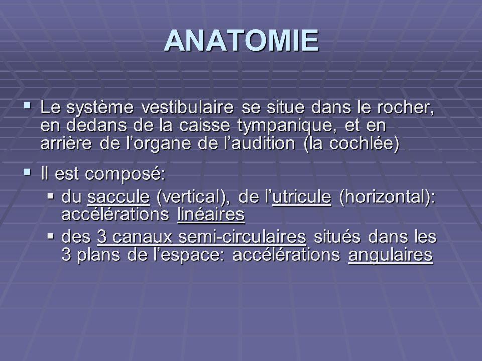 ANATOMIELe système vestibulaire se situe dans le rocher, en dedans de la caisse tympanique, et en arrière de l'organe de l'audition (la cochlée)