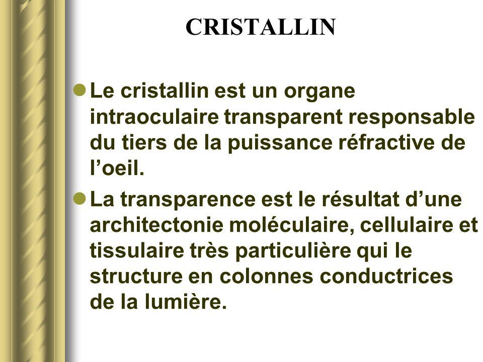 CRISTALLINLe cristallin est un organe intraoculaire transparent responsable du tiers de la puissance réfractive de l'oeil.