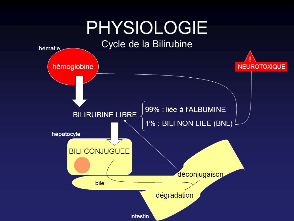 PHYSIOLOGIE Cycle de la Bilirubine ! hémoglobine