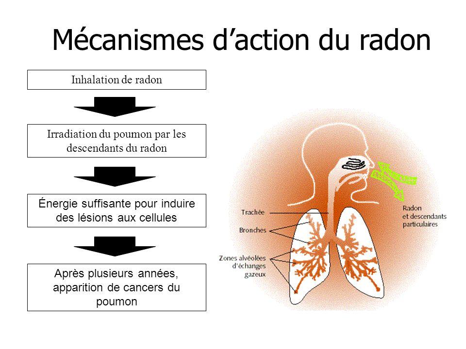 Mécanismes d'action du radon
