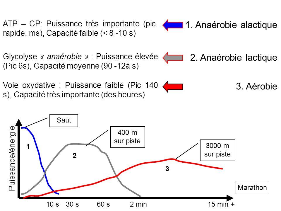 1. Anaérobie alactique 2. Anaérobie lactique 3. Aérobie