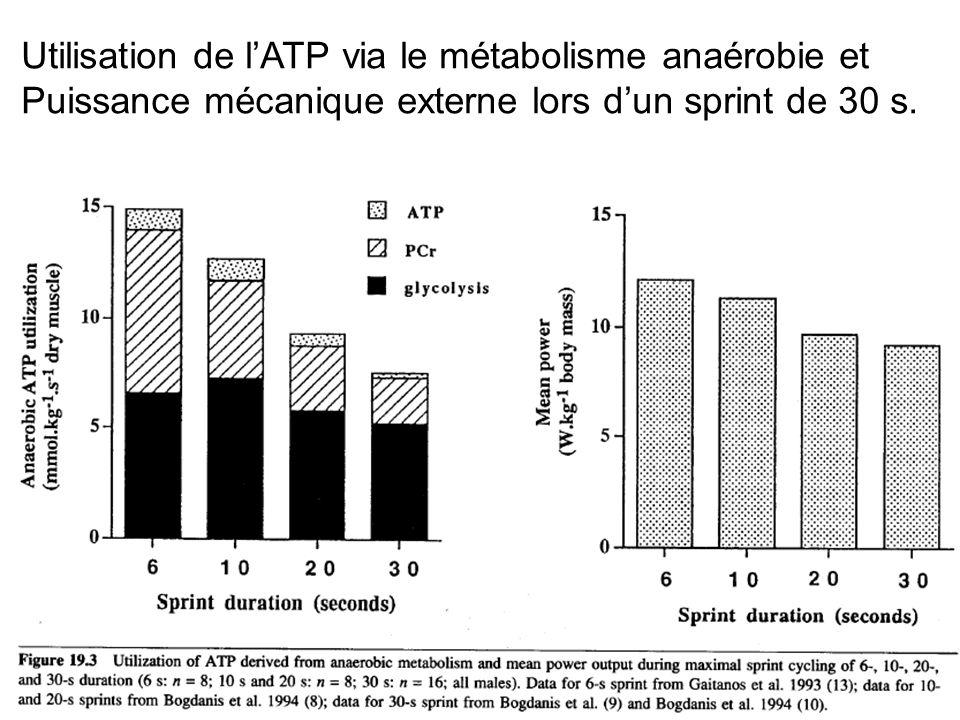 Utilisation de l'ATP via le métabolisme anaérobie et Puissance mécanique externe lors d'un sprint de 30 s.