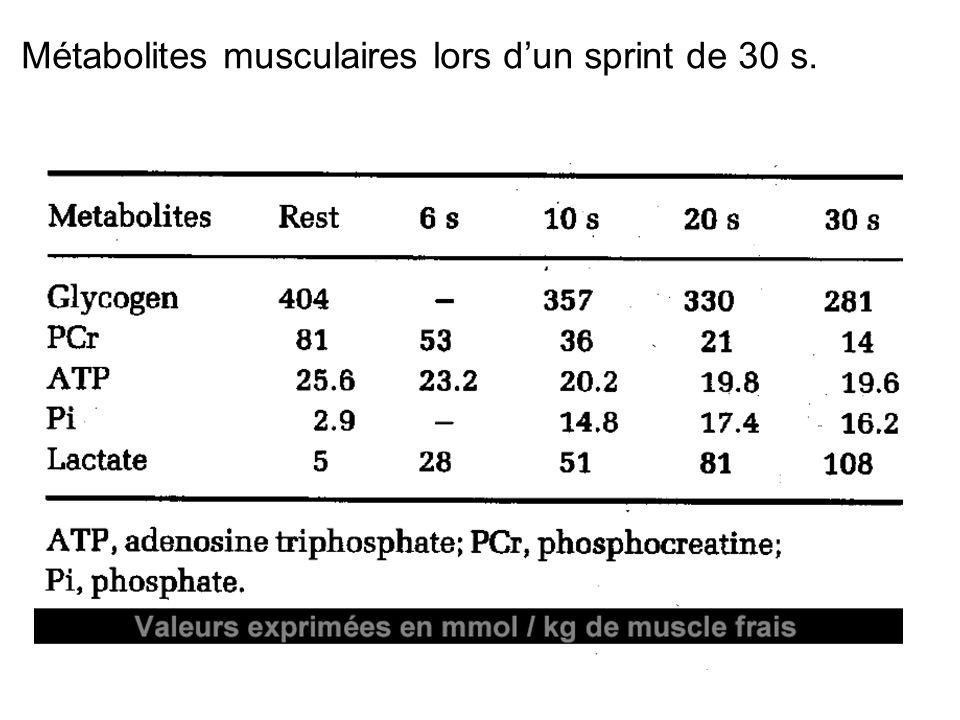 Métabolites musculaires lors d'un sprint de 30 s.
